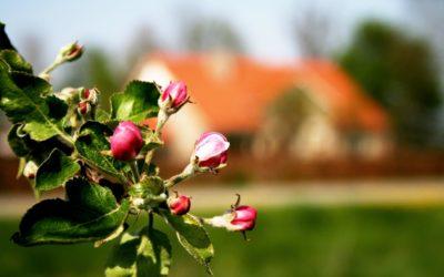 De innerlijke tegenstrijdigheid van de biologische landbouw